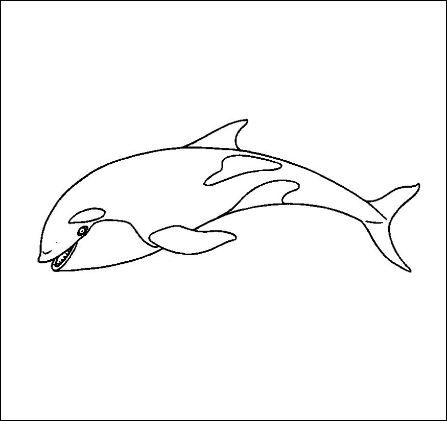 killer whale coloring page orca whale coloring page worksheet educationcom whale page killer coloring