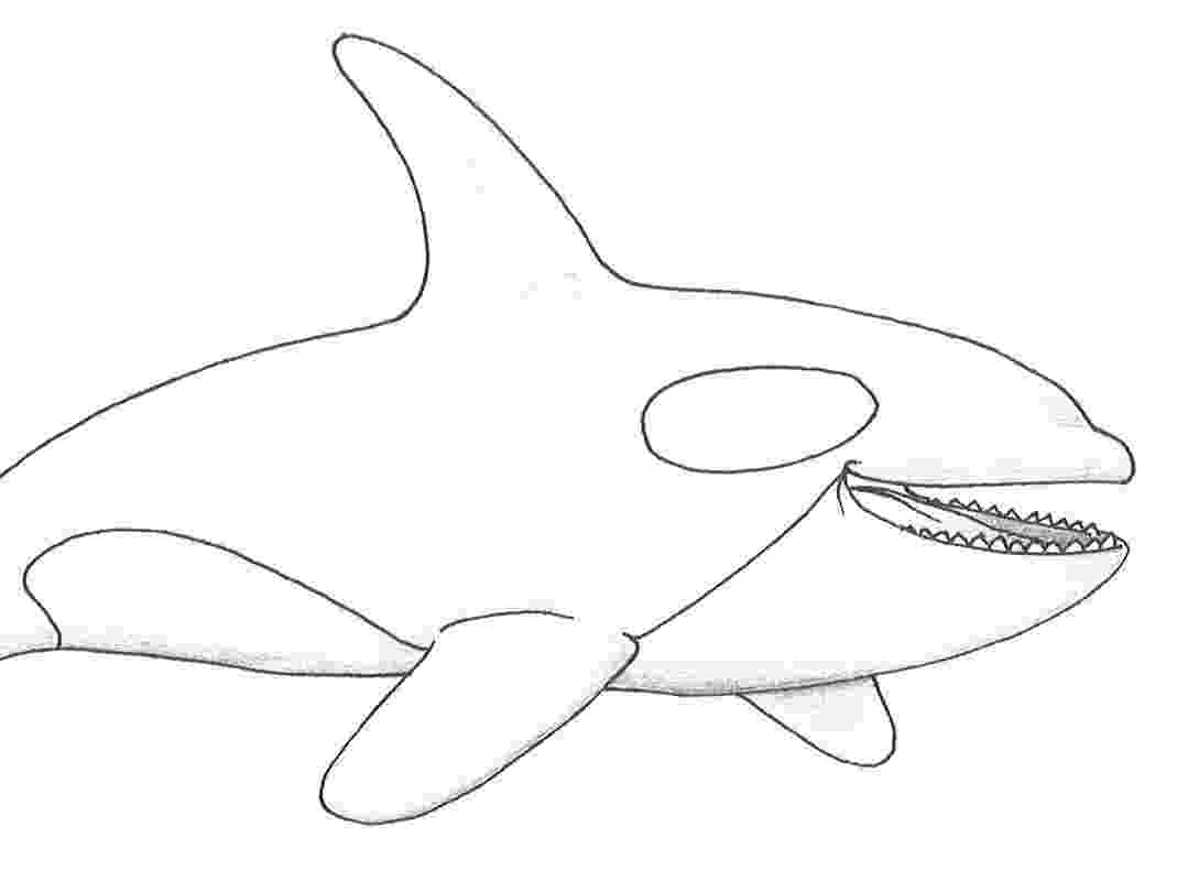 killer whale pictures to color awesome killer whale coloring page kids play color pictures color to whale killer