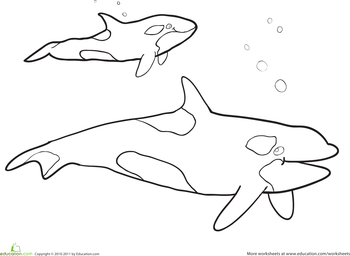 killer whale pictures to color realistic dolphin drawing at getdrawingscom free for color whale killer pictures to
