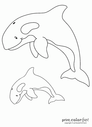 killer whale pictures to color two orcas coloring page print color fun pictures to whale color killer