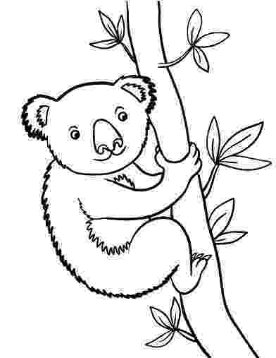 koala color free printable koala coloring pages for kids color koala