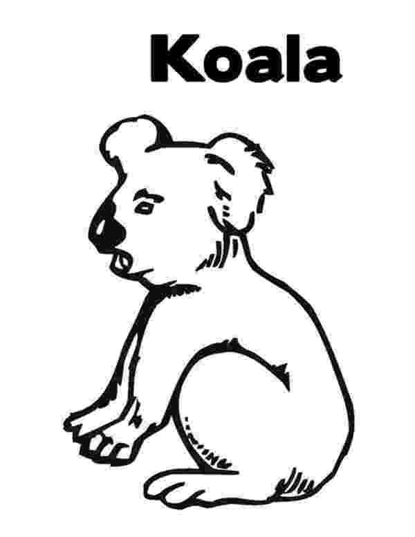 koala color koala cartoon drawing at getdrawingscom free for color koala