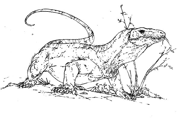 komodo dragon color dangerous animal komodo dragon coloring pages download color dragon komodo