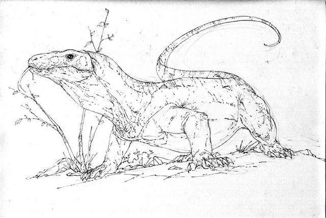 komodo dragon color komodo dragon full stomach coloring pages download color komodo dragon