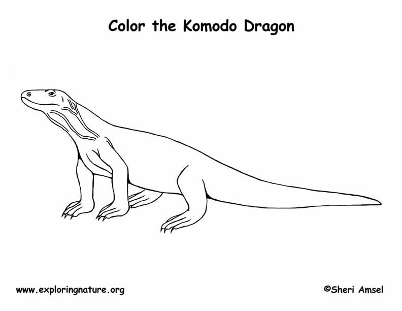 komodo dragon color komodo dragon lazing on riverside coloring pages dragon color komodo