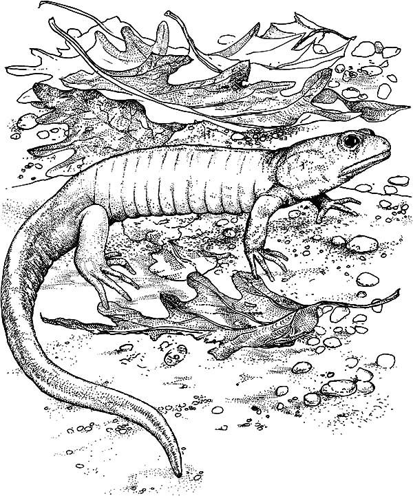 komodo dragon color pin oleh muse printables di coloring pages at coloringcafe color dragon komodo