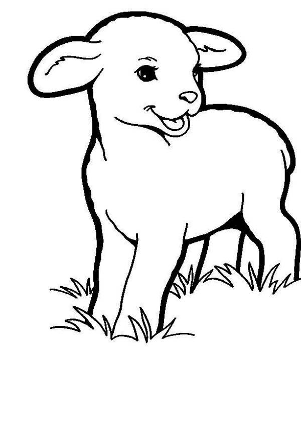 lamb coloring page cute lamb laughing coloring page coloring sky lamb page coloring