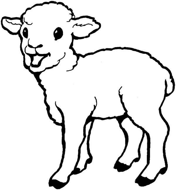 lamb coloring page cute sheep 4 coloring page coloring lamb page