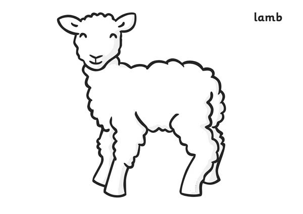 lamb coloring page free printable sheep coloring pages for kids lamb page coloring
