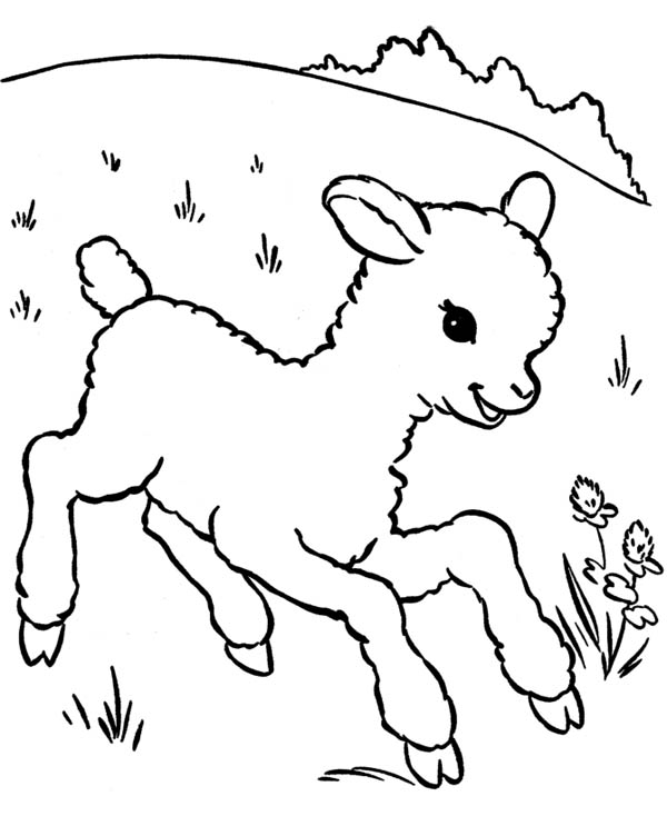 lamb coloring pages little lamb running aroung coloring page coloring sky pages coloring lamb
