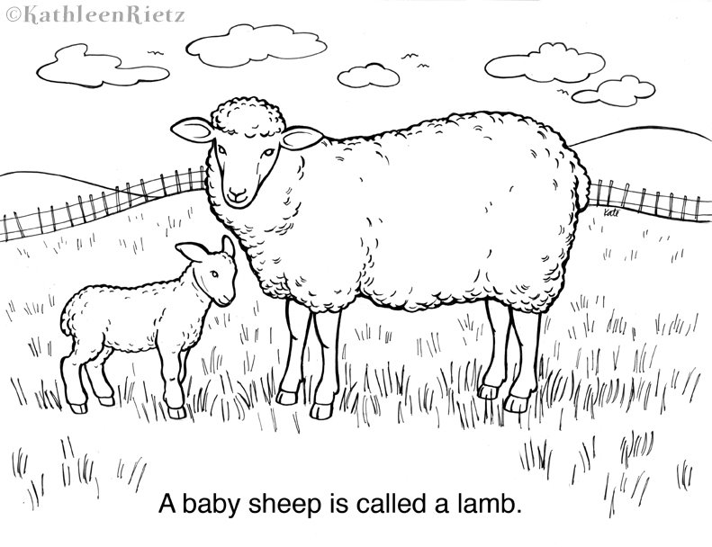 lamb pictures to color sheep coloring pages kidsuki to lamb pictures color