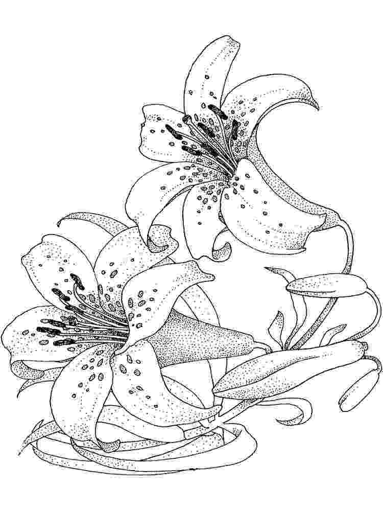 lily flower coloring pages 1172x1394 pages free roses realistic rose line drawing coloring flower pages lily