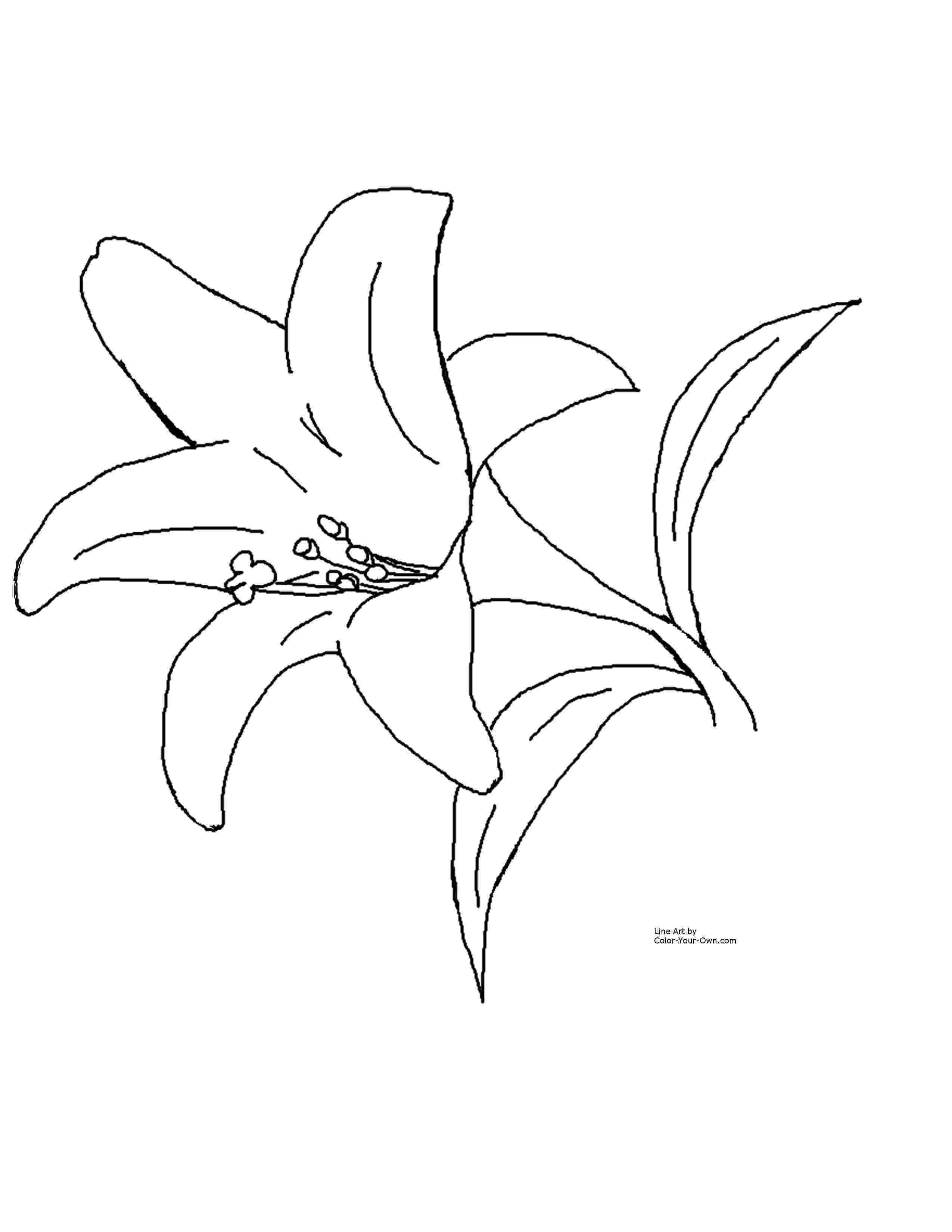 lily flower coloring pages free easter lily coloring pages lily flower coloring pages