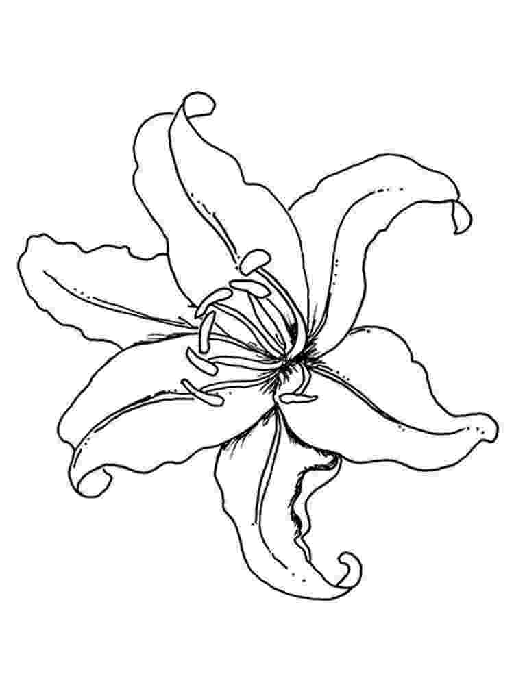 lily flower coloring pages lilium flower coloring pages for kids printable free coloring pages lily flower