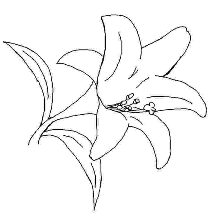 lily flower coloring pages lily coloring pages to download and print for free lily coloring pages flower