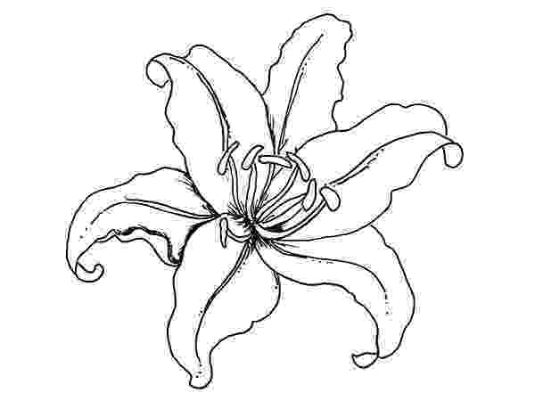lily flower coloring pages lily flower coloring page download print online flower pages lily coloring