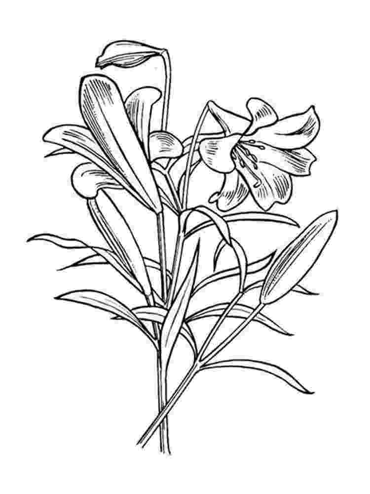 lily flower coloring pages lily flower coloring page free printable coloring pages lily pages coloring flower