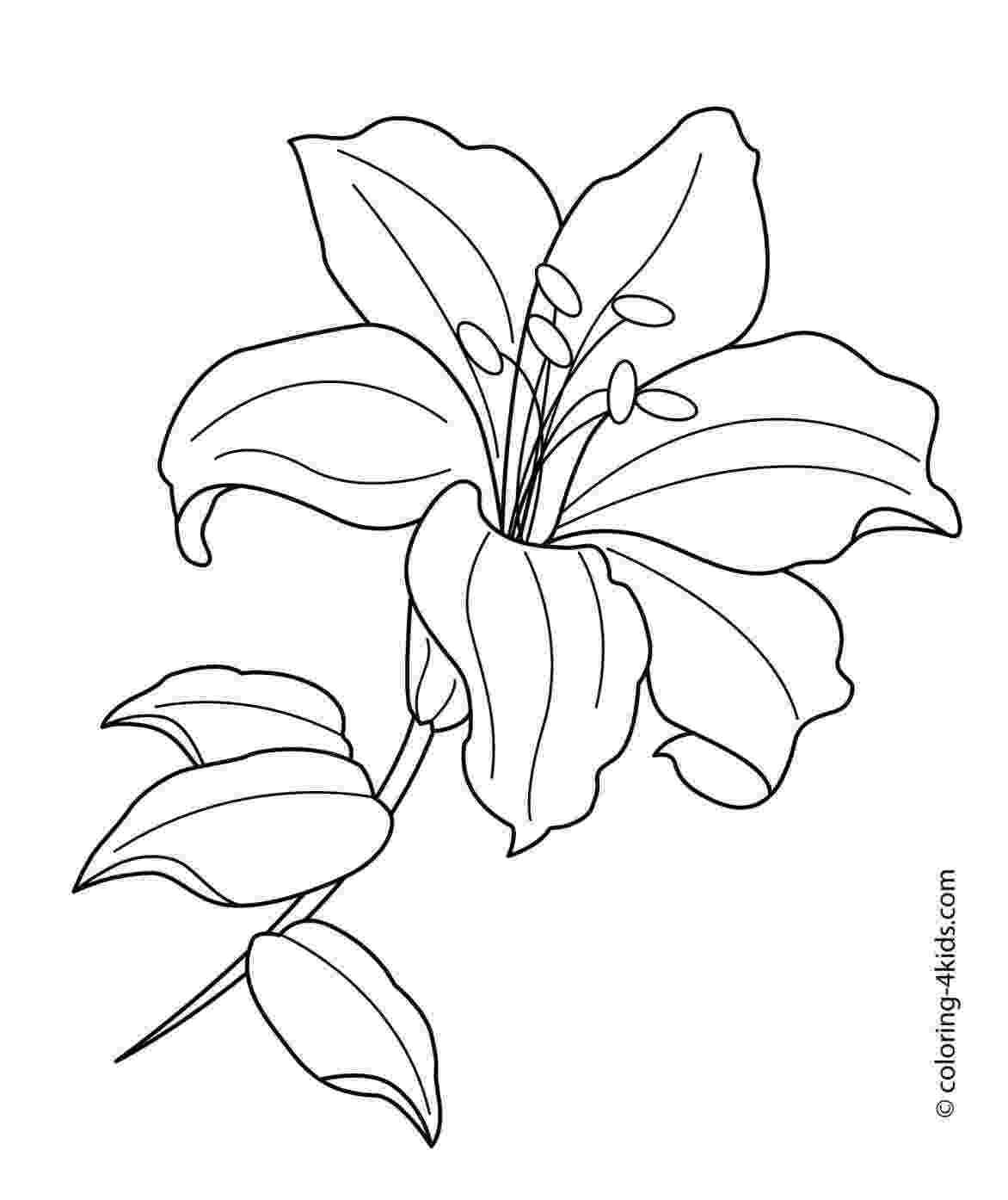 lily flower coloring pages lily flower coloring pages download and print lily flower lily flower coloring pages
