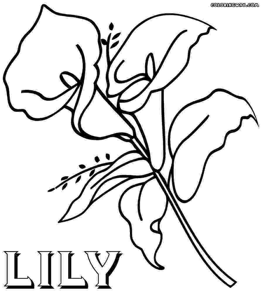 lily flower coloring pages lily flowers coloring pages at getcoloringscom free lily flower coloring pages