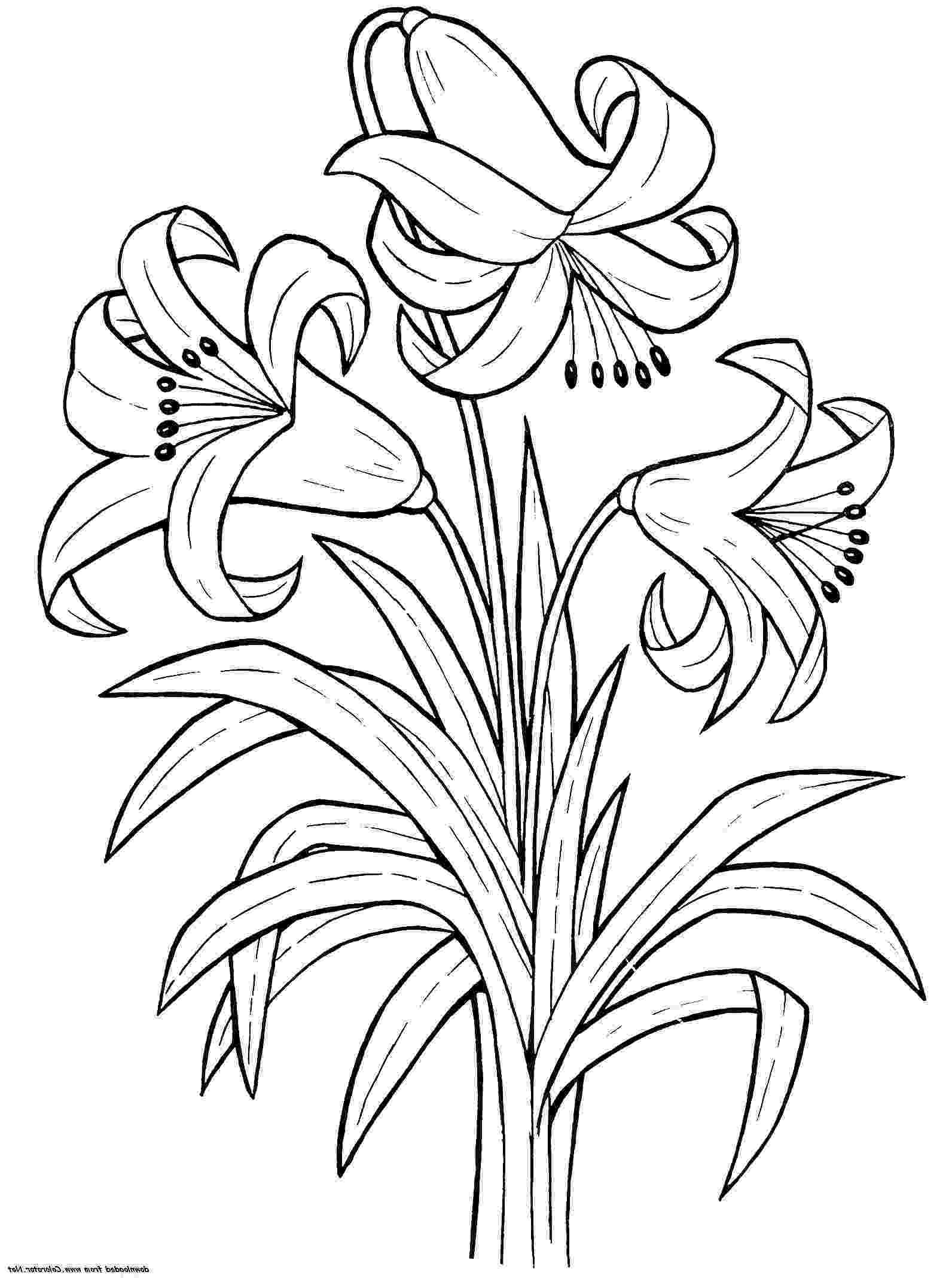 lily flower coloring pages printable lily flower coloring pages k5 worksheets pages coloring lily flower