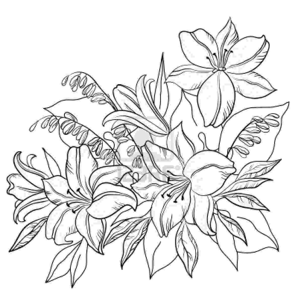 lily flower coloring pages sunbeamflowers flowers outlines pages lily coloring flower