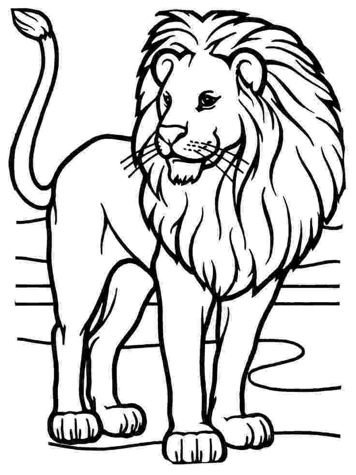 lion color page african lion face coloring sheet coloring pages page lion color