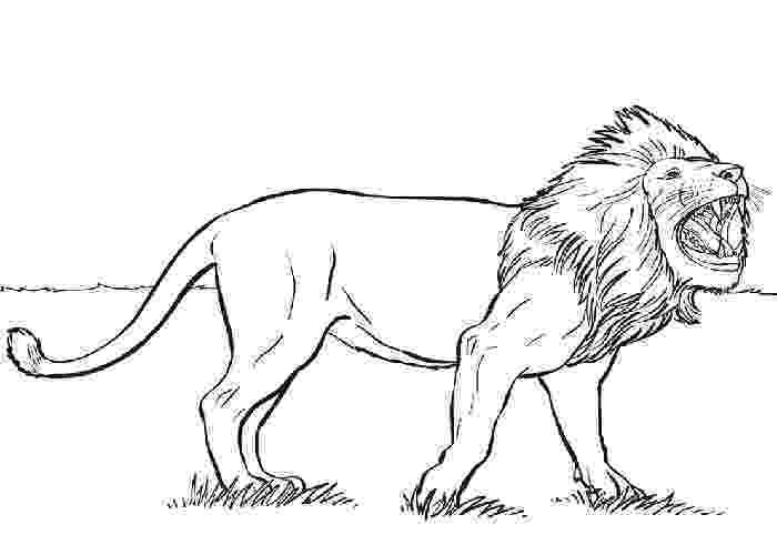 lion coloring book animal family coloring page coloring home book coloring lion