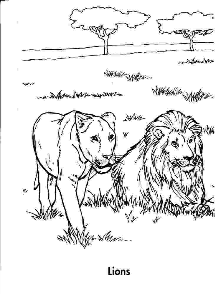 lion coloring book free printable lion coloring pages for kids lion coloring book