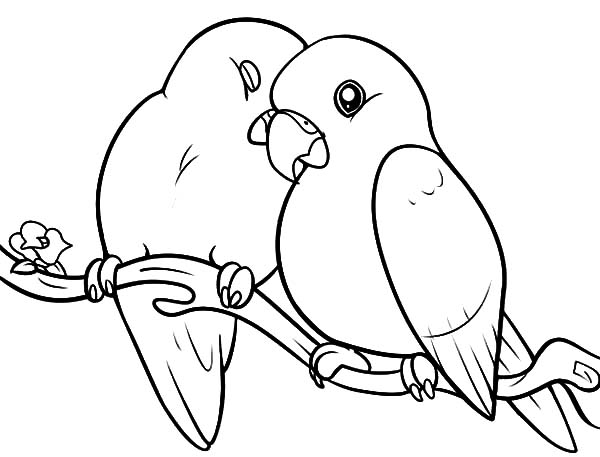 love birds coloring pages birds drawing images at getdrawingscom free for coloring pages love birds