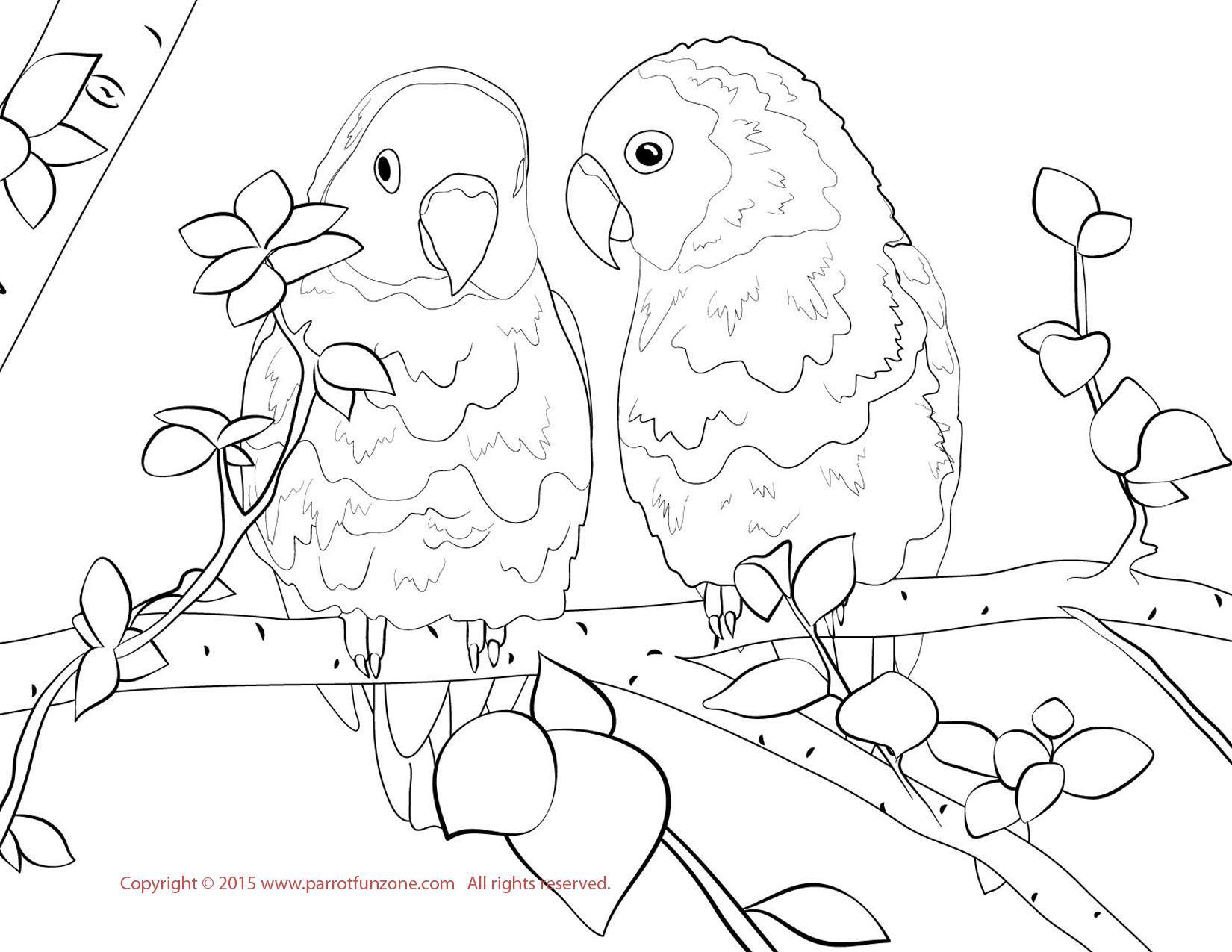 love birds coloring pages love birds coloring page love coloring pages birds