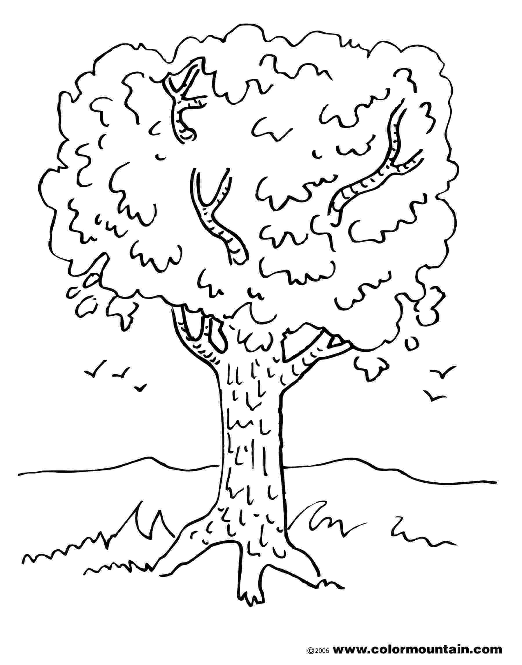 maple tree coloring page culinary adventures with camilla sweetened with maple tree coloring page maple