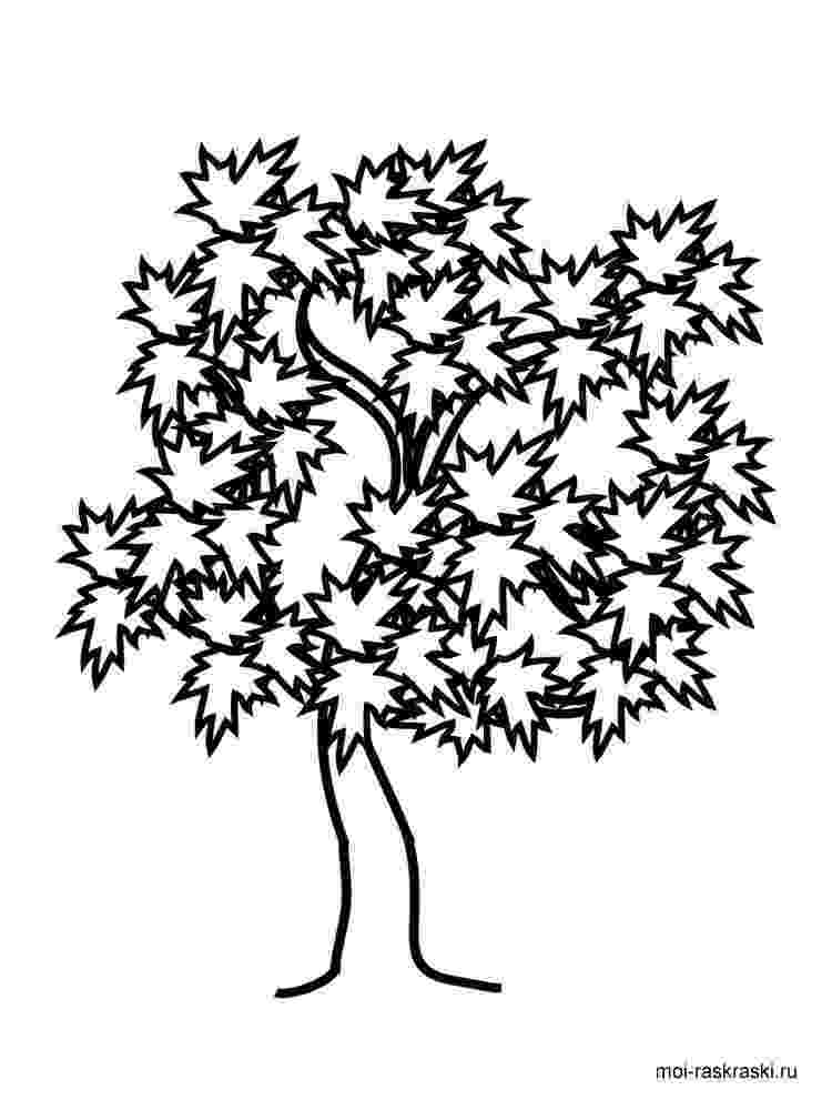 maple tree coloring page maple tree coloring pages for kids free printable maple coloring maple tree page