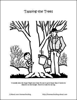 maple tree coloring page maple tree coloring pages for kids free printable maple page tree maple coloring