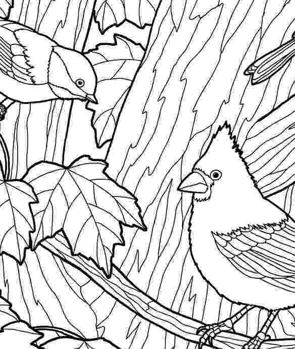maple tree coloring page tree coloring pages maple tree coloring page