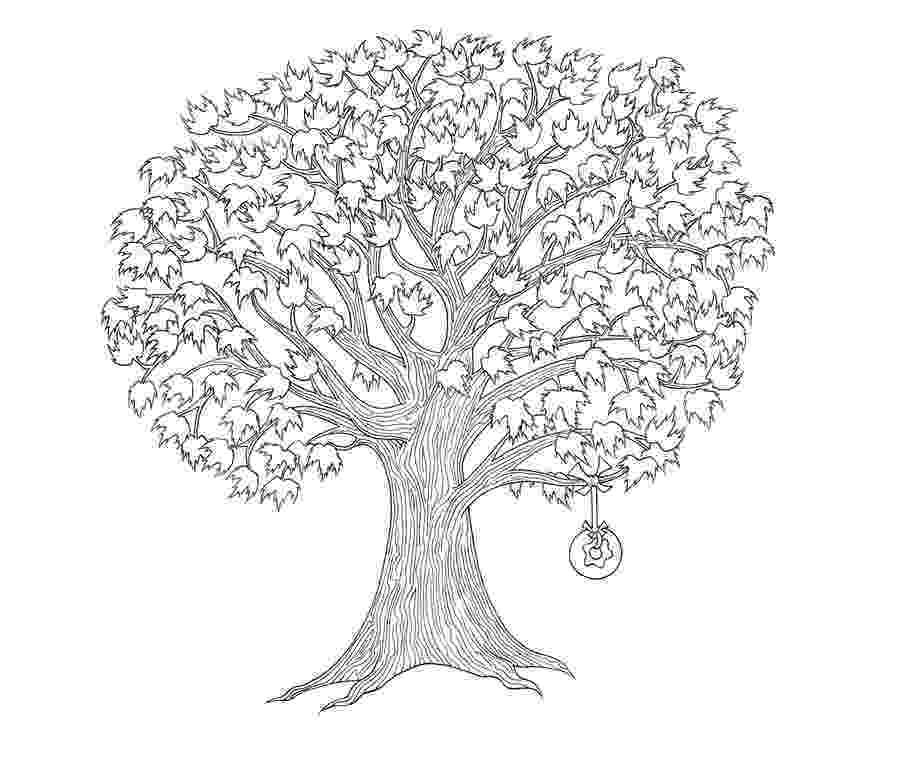 maple tree coloring page tree notes how to identify common tree leaves coloring page tree maple