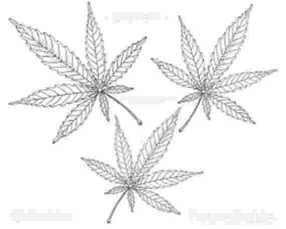 marijuana leaf coloring pages weed coloring pages marijuana leaf outline free coloring marijuana leaf pages