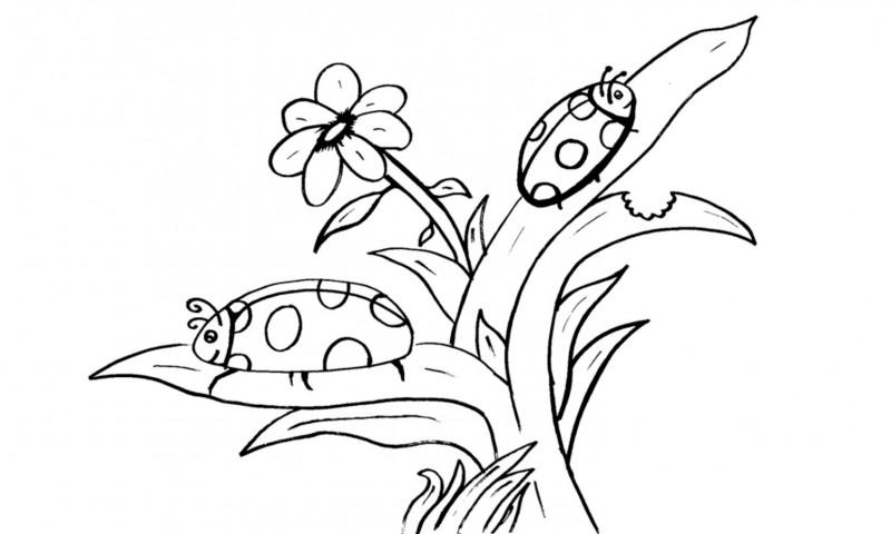 mariquita dibujo para colorear dibujos para colorear insectos en primavera para colorear dibujo mariquita