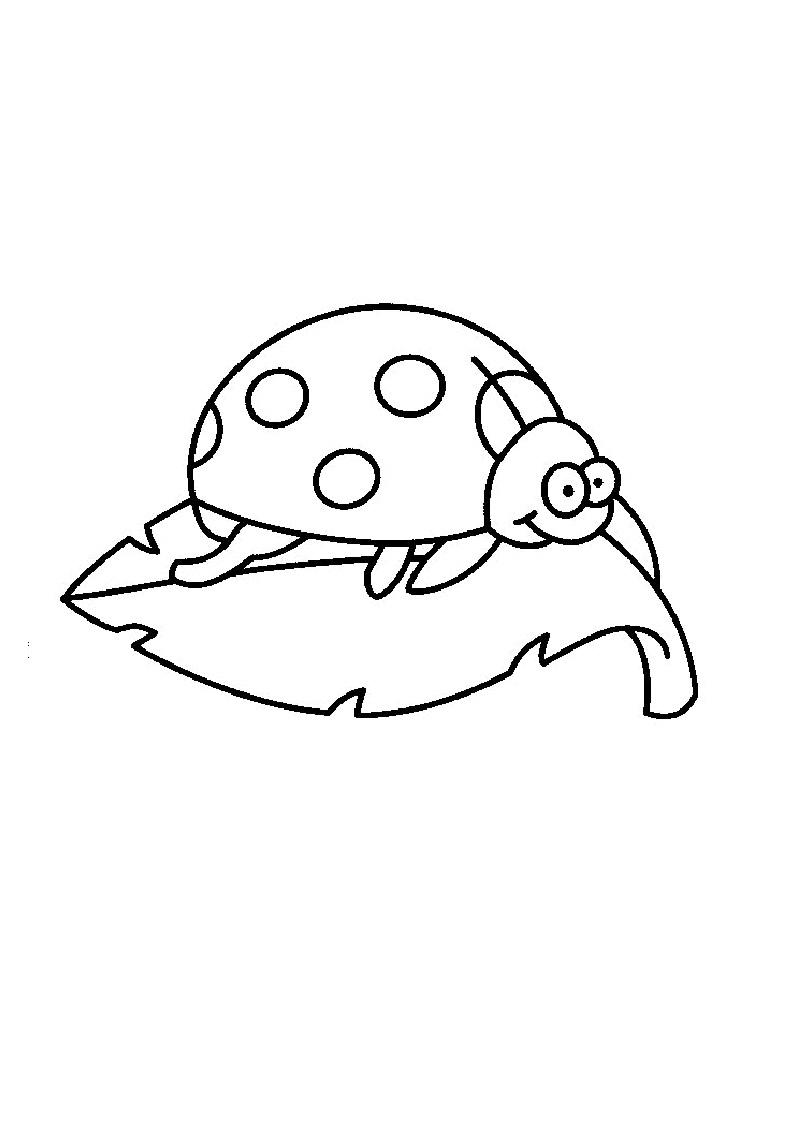 mariquita dibujo para colorear insectos para mariquita colorear dibujo