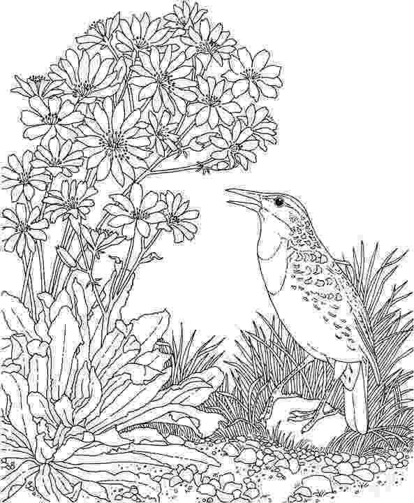 meadowlark coloring page 44 western meadowlark coloring page western meadowlark meadowlark page coloring