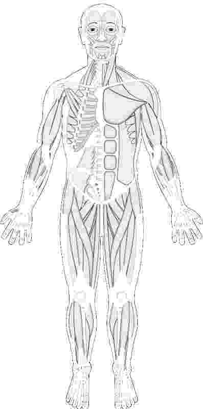 muscle coloring pages muscular system coloring pages free food ideas muscle coloring pages