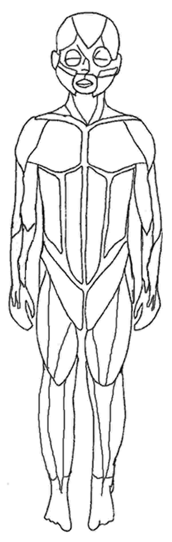 muscle coloring pages muscular system human back coloring page coloring home coloring pages muscle