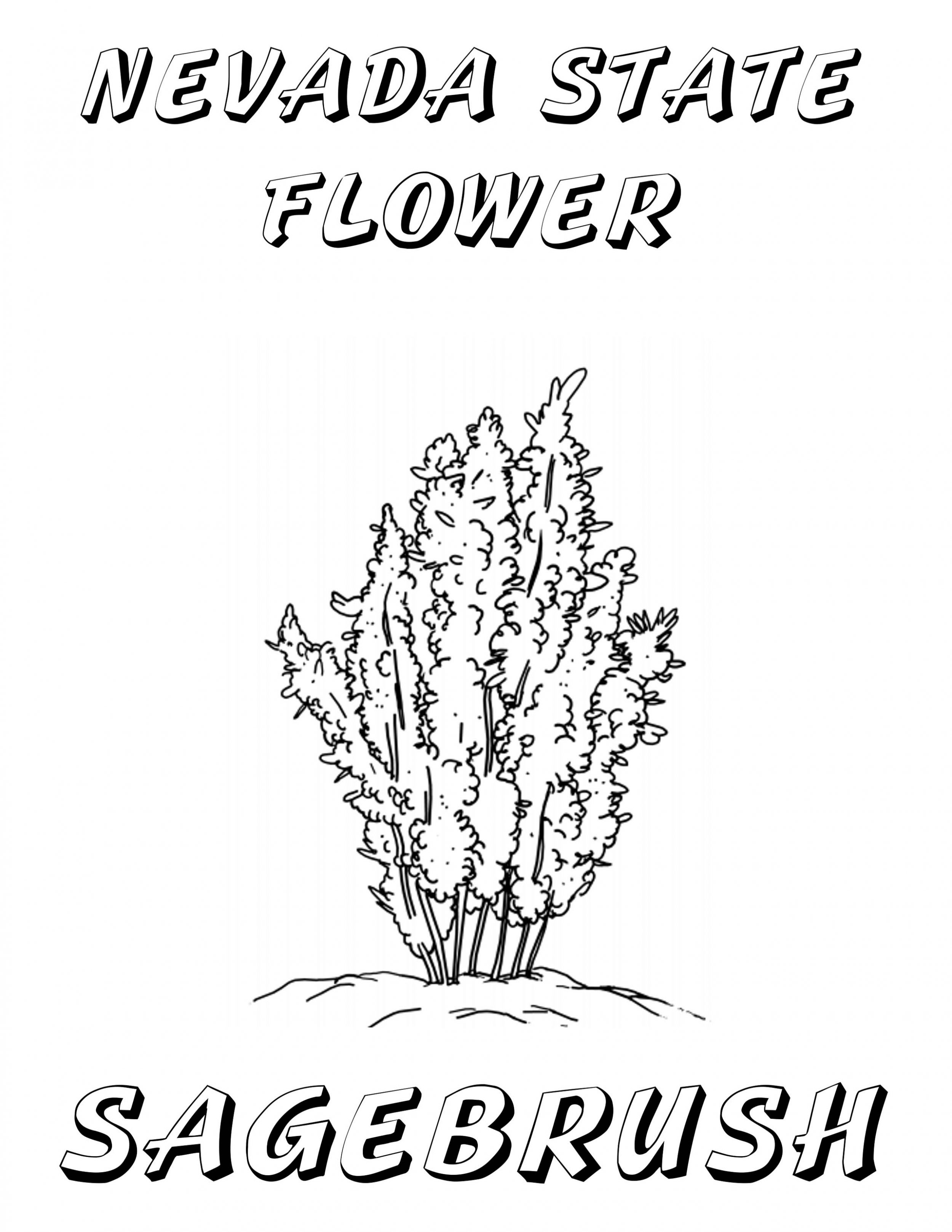 nevada state flower 50 state flowers coloring pages for kids flower state nevada