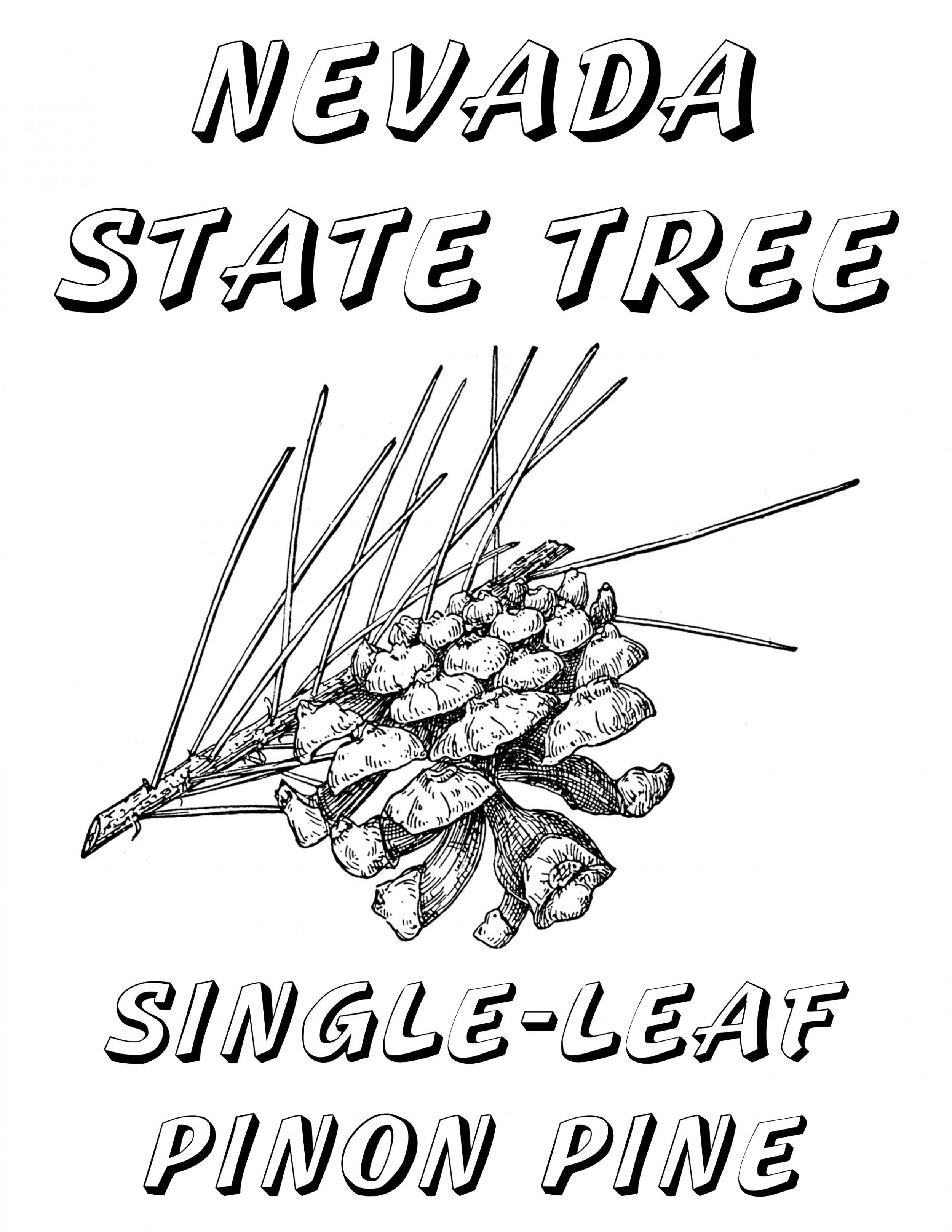 nevada state flower free nevada themed printable coloring book windy pinwheel nevada state flower