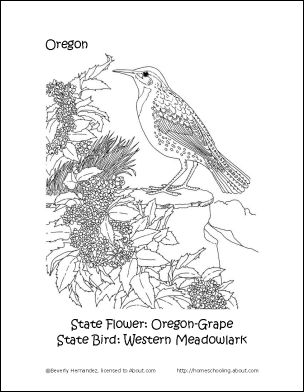 nevada state flower georgia state flower coloring page free printable state nevada flower