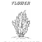 nevada state flower nevada state bird coloring page sketch coloring page flower nevada state