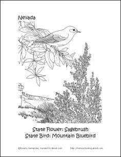 nevada state flower nevada state bird coloring page sketch coloring page state nevada flower