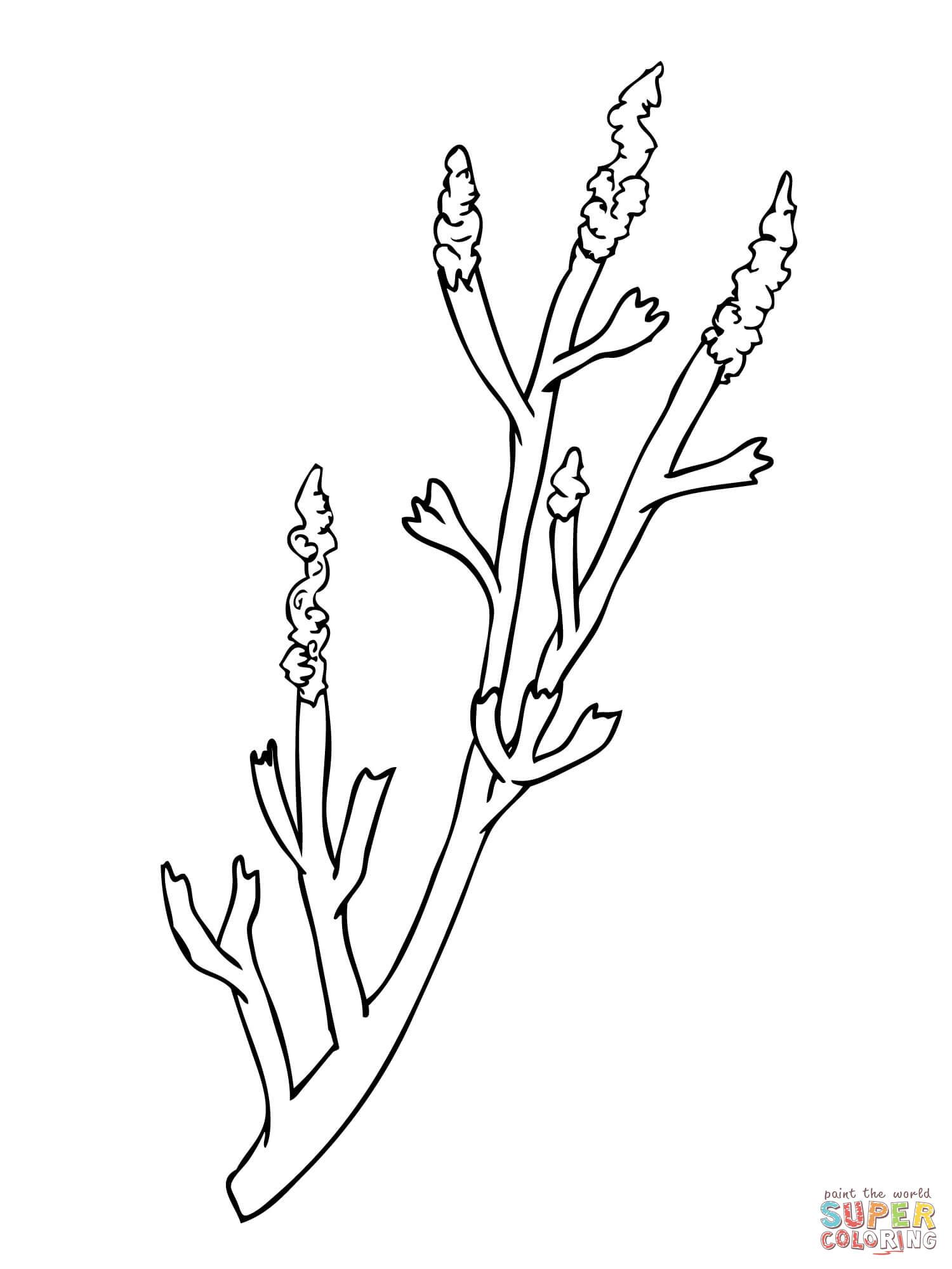 nevada state flower sagebrush drawing at getdrawingscom free for personal flower nevada state