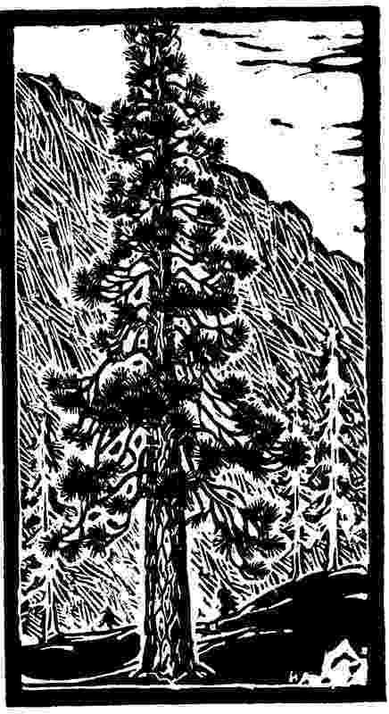 new jersey state tree new jersey state tree coloring page free printable jersey state tree new