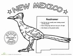 new mexico state flower new mexico crayolacomau new state flower mexico