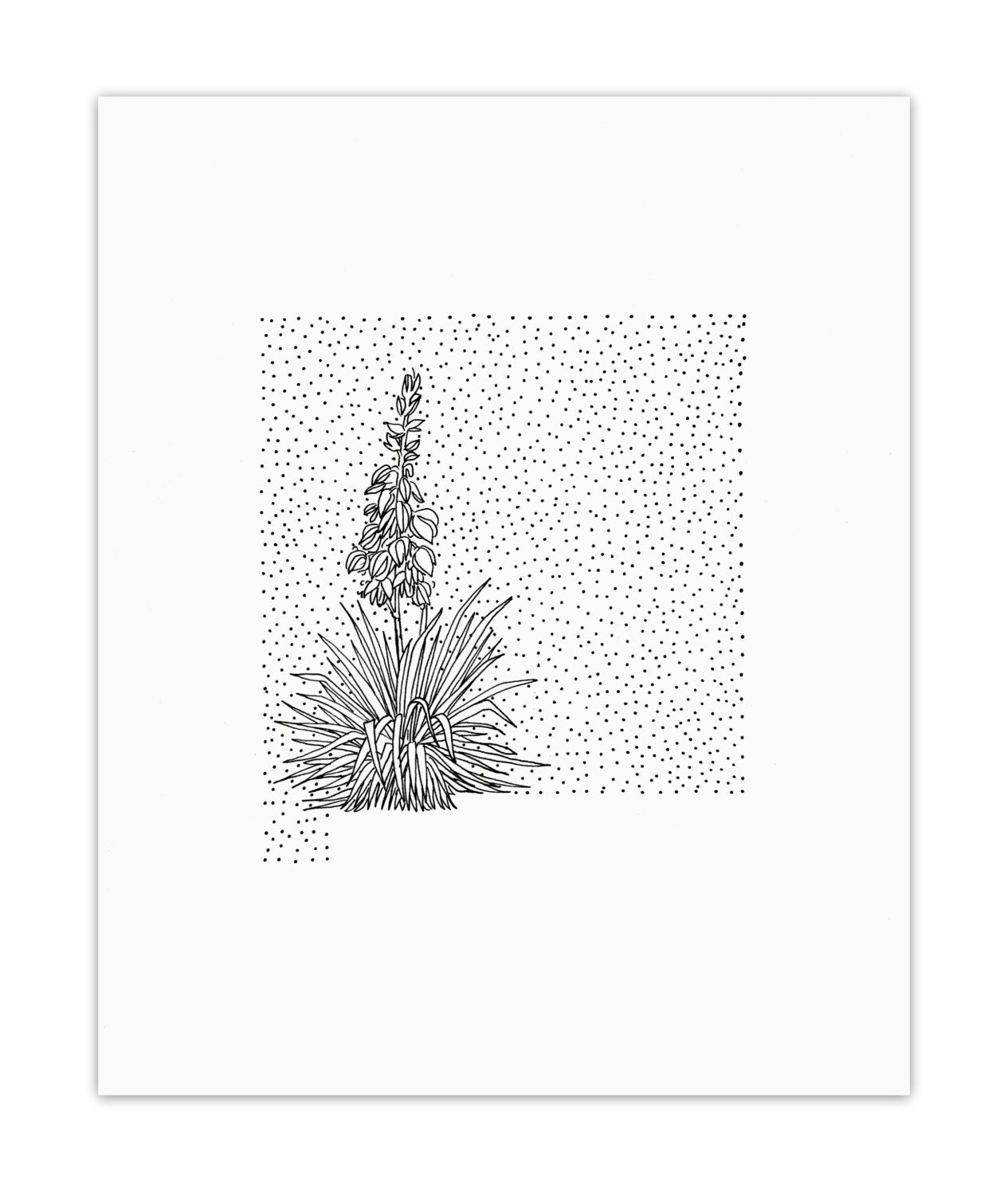 new mexico state flower usa states state of new mexico coloring pages state flower new mexico